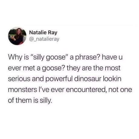 """Text - Natalie Ray @natalieray Why is """"silly goose"""" a phrase? have u ever met a goose? they are the most serious and powerful dinosaur lookin monsters I've ever encountered, not one of them is silly."""