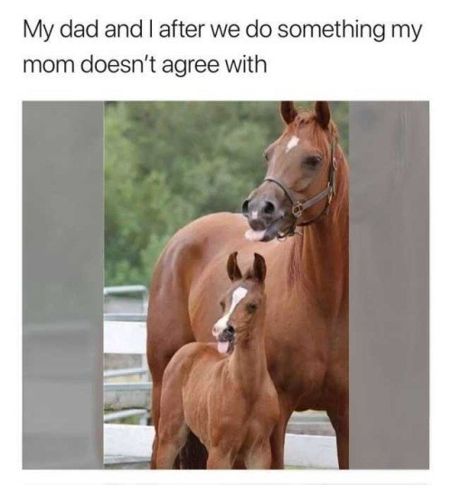 Horse - My dad and I after we do something my mom doesn't agree with