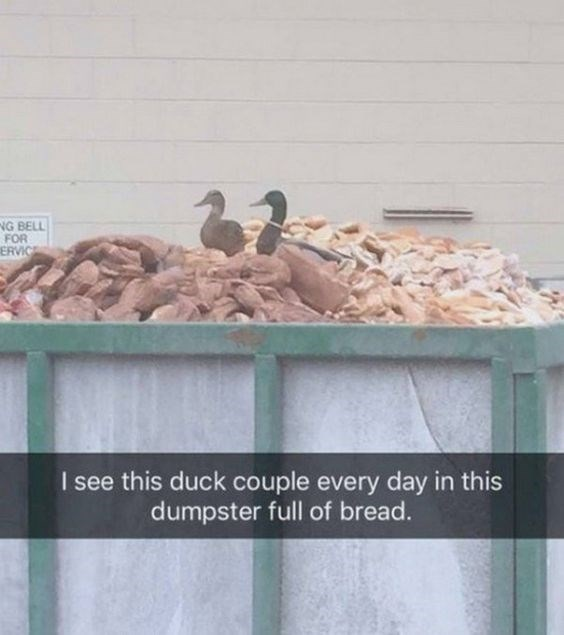 Bird - NG BELL FOR ERVICE I see this duck couple every day in this dumpster full of bread.