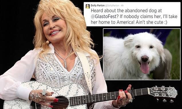 Canidae - Dolly Parton DolyParton 4h Heard about the abandoned dog at @GlastoFest? If nobody claims her, I'll take her home to America! Ain't she cute:)