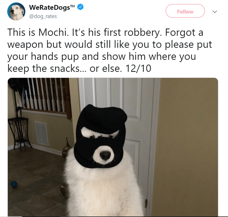 Panda - WeRateDogsTM Follow @dog_rates This is Mochi. It's his first robbery. Forgot a weapon but would still like you to please put your hands pup and show him where you keep the snacks... or else. 12/10