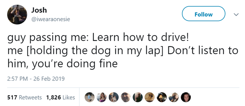 Text - Josh Follow @iwearaonesie guy passing me: Learn how to drive! me [holding the dog in my lap] Don't listen to him, you're doing fine 2:57 PM - 26 Feb 2019 517 Retweets 1,826 Likes