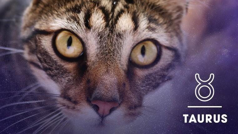 Cat - TAURUS