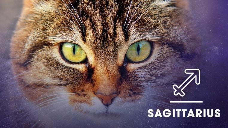 Cat - SAGITTARIUS