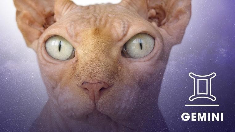 Cat - GEMINI