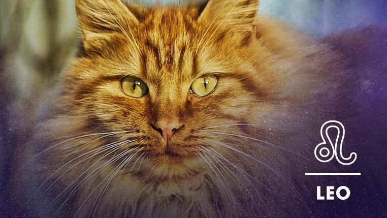 Cat - LEO