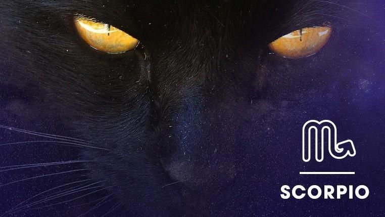 Cat - SCORPIO
