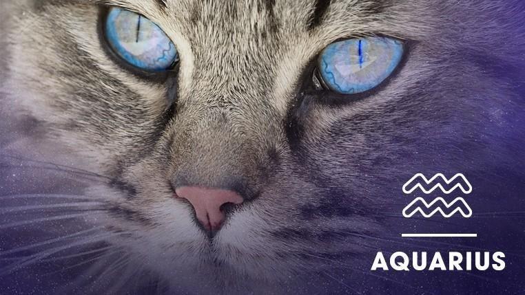 Cat - AQUARIUS