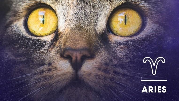 Cat - ARIES