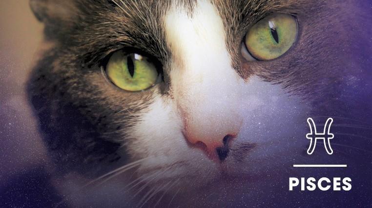 Cat - PISCES