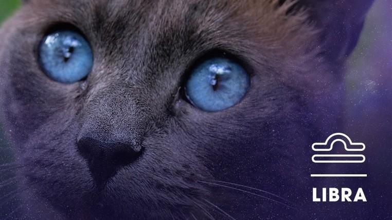 Cat - LIBRA