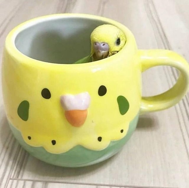 cute animals - Cup