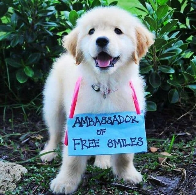 cute animals - Dog - AMBASSADOR OF FREE SMILES