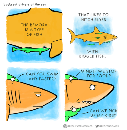 animal comics - Fish - backseat drivers of the sea THAT LIKES TO HITCH RIDES THE REMORA IS A TYPE OF FISH... WITH BIGGER FISH MIND IF WE STOP FOR FOOD? CAN YOU SWIM ANY FASTER? CAN WE PICK UP MY KIDS? OlePROLIFICPENCOMICS @PROPENCOMICS