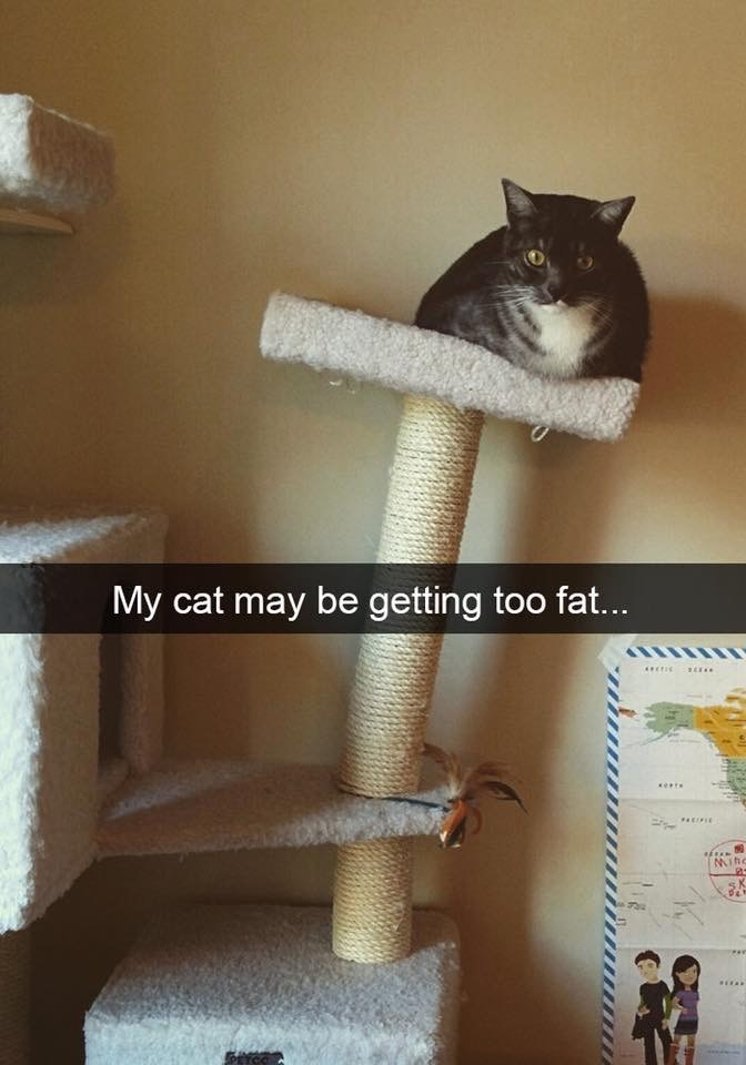 "Pic of a cat sitting on a cat castle leaning over with Snapchat caption that reads, ""My cat may be getting too fat..."""