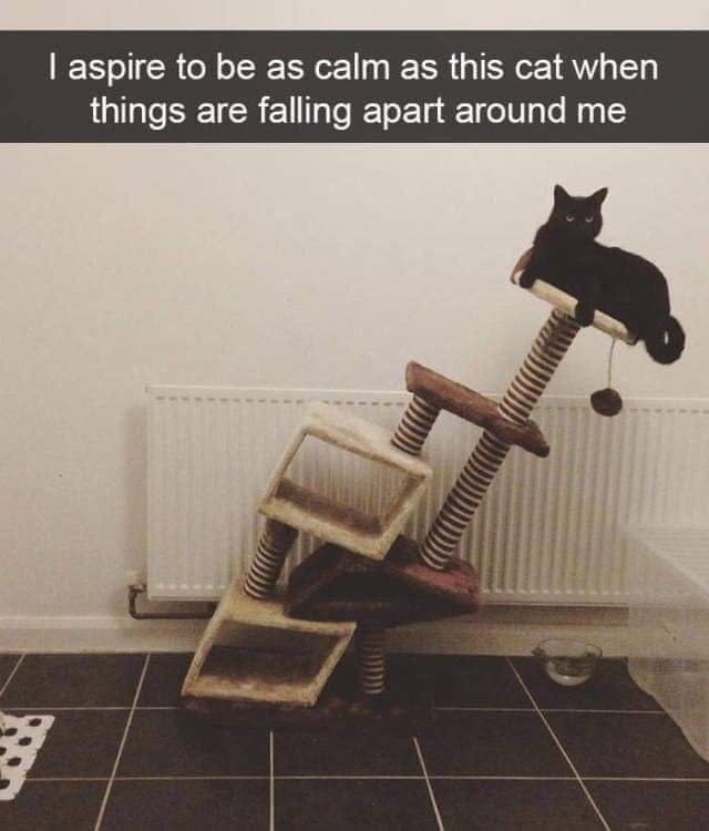 Chair - I aspire to be as calm as this cat when things are falling apart around me