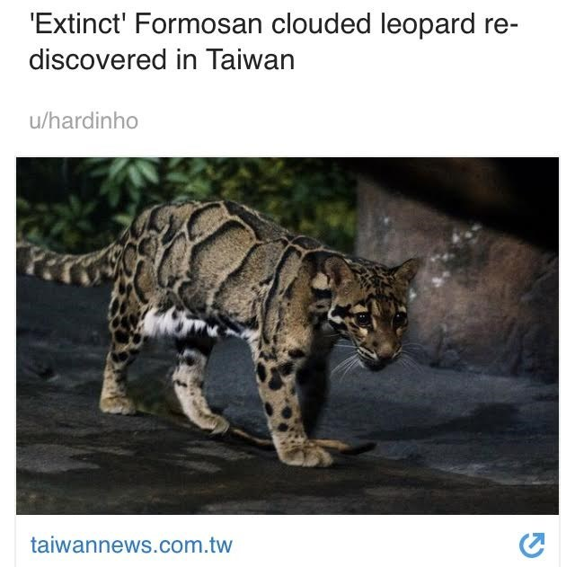 Wildlife - 'Extinct' Formosan clouded leopard discovered in Taiwan u/hardinho taiwannews.com.tw