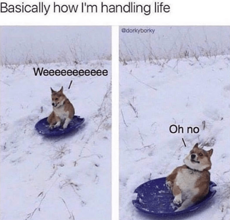 dog meme sledding in the snow and then realizing it's a bad idea and comparing it to how people handle life