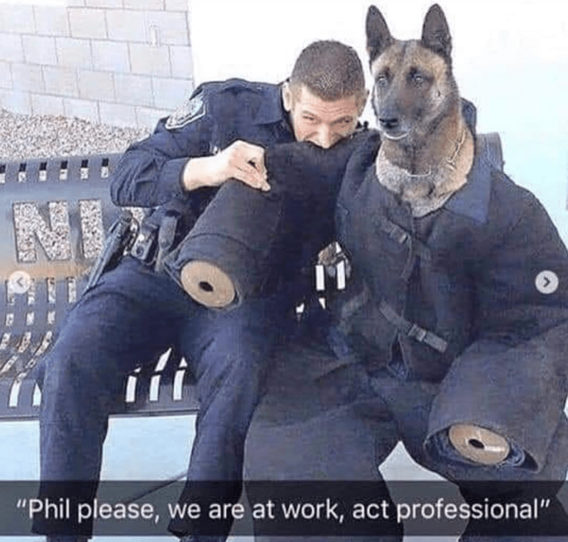dog meme of a dog wearing a police uniform and a cop next to him is biting his arm