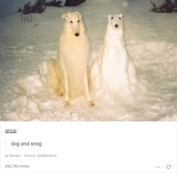 dog meme of a dog that looks like a snow version of himself