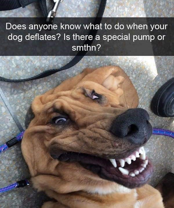 dog meme of a dog that looks deflated