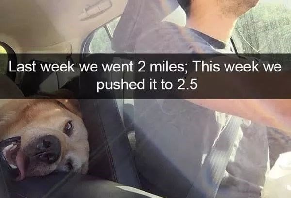 dog meme of a dog that looks exhausted after running