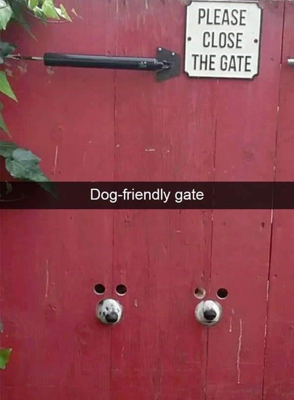 dog meme of a gate that has holes for two dogs to see and stick their mouths through
