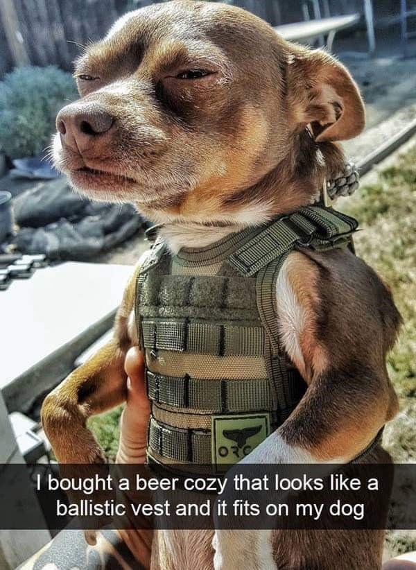 dog meme of a dog that looks like he is wearing a ballistic vest