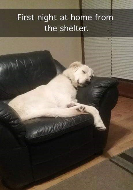 dog meme of a dog that just came home from a shelter and is sleeping