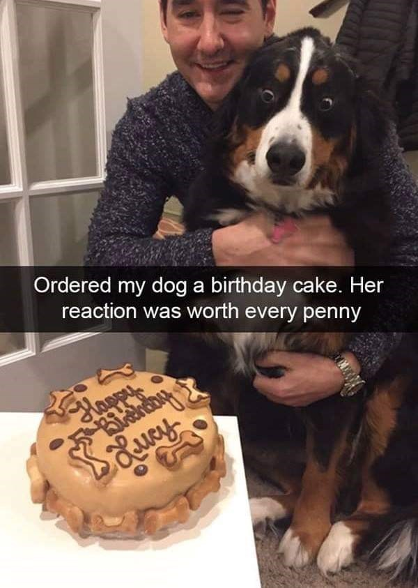 dog meme of a dog that looks surprised to see a dog birthday cake