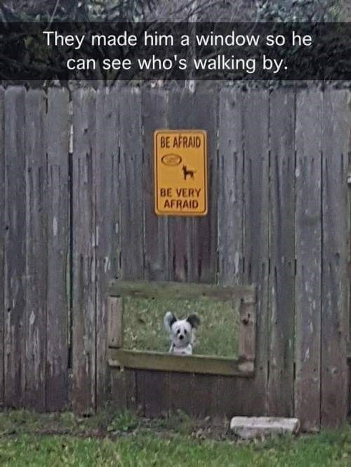 dog meme of a small dog that has a window in the gate to see who's walking by