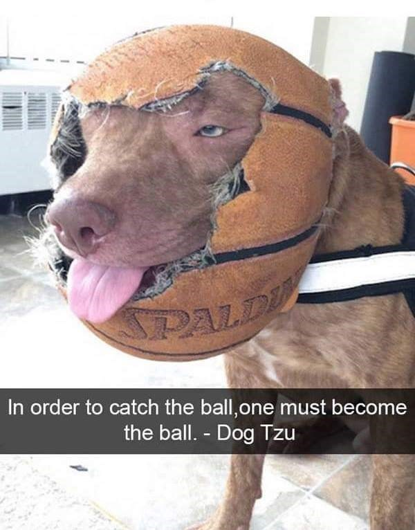 dog meme of a dog that is wearing a basketball
