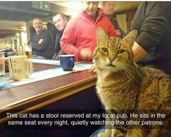bar cat - 9278174208