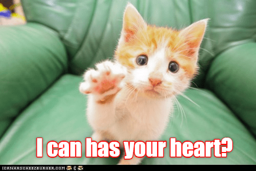 Cat - I can has your heart? ICANHASCHEE2EURGER cOM