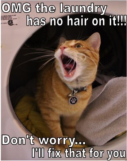 Photo caption - OMG the laundry has no hair on it!!! Don't worry.. O'll fix that for you