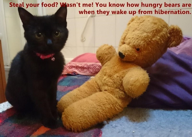 Cat - Steal your food? Masn't me! You know how hungry bears are when they wake up from hibernation.
