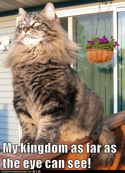 Cat - My kingdom as far as the eye can see! CANHASCHEE2EURGER cOM