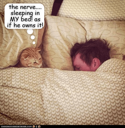 Text - the nerve.... sleeping in MY bed! as if he owns it! ICANHSCHEE2E0RSER. COM