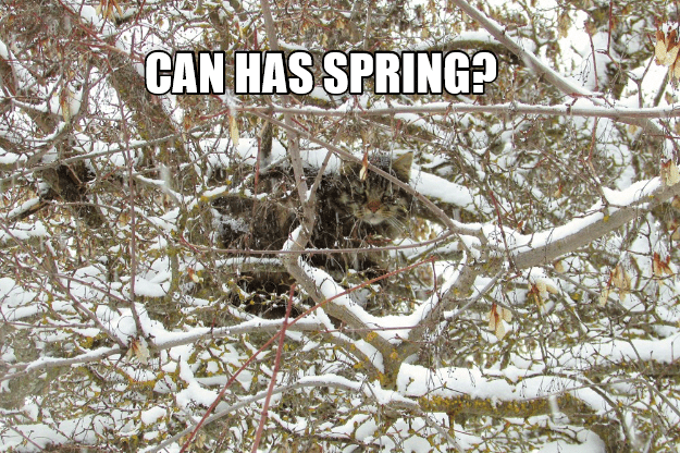 Branch - CAN HAS SPRING?