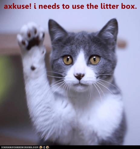 Cat - axkuse! i needs to use the litter box. ICANHASCHEE2EURGER cOM