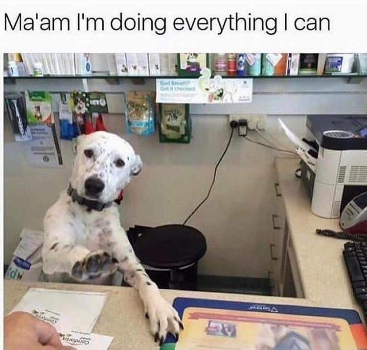 dog working behind desk lifting paw Ma'am I'm doing everything I can fdw