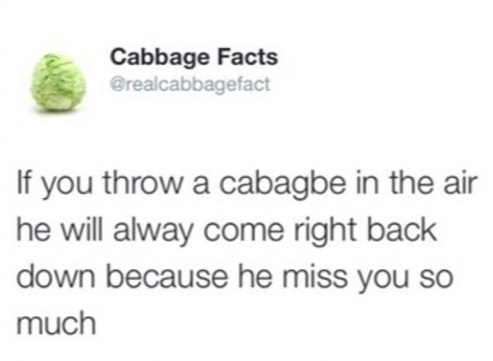 twitter post If you throw a cabagbe in the air he will alway come right back down because he miss you so much
