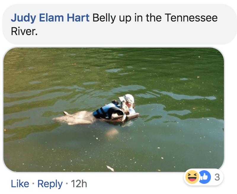Water - Judy Elam Hart Belly up in the Tennessee River. 3 Like Reply 12h
