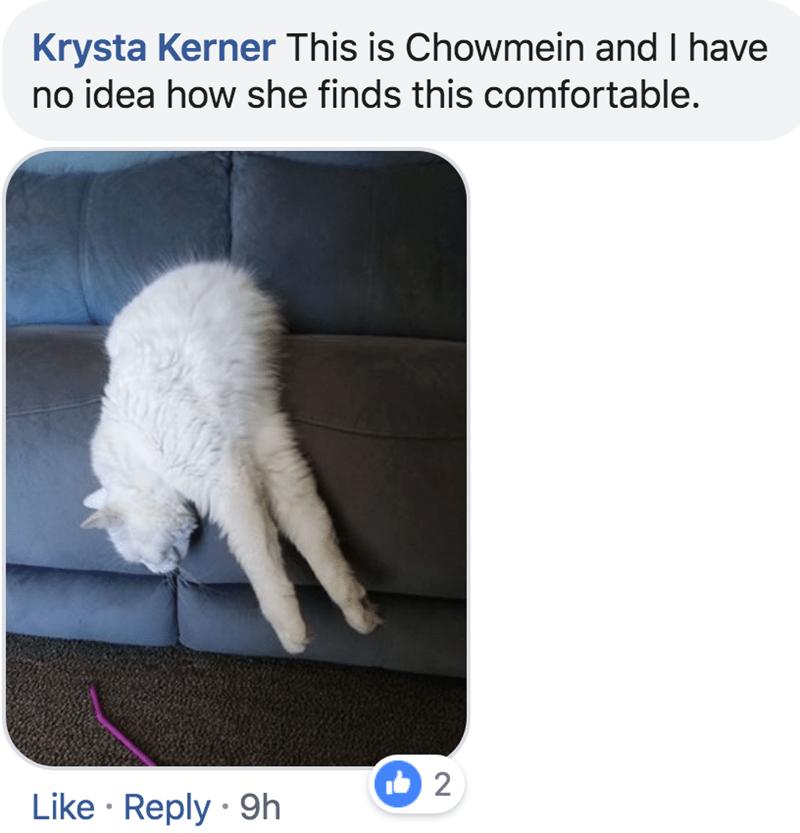 Cat - Krysta Kerner This is Chowmein and I have no idea how she finds this comfortable. 2 Like Reply 9h