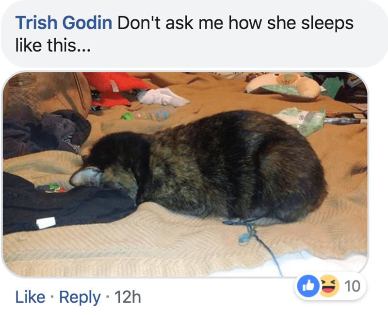 Photo caption - Trish Godin Don't ask me how she sleeps like this... 10 Like Reply 12h