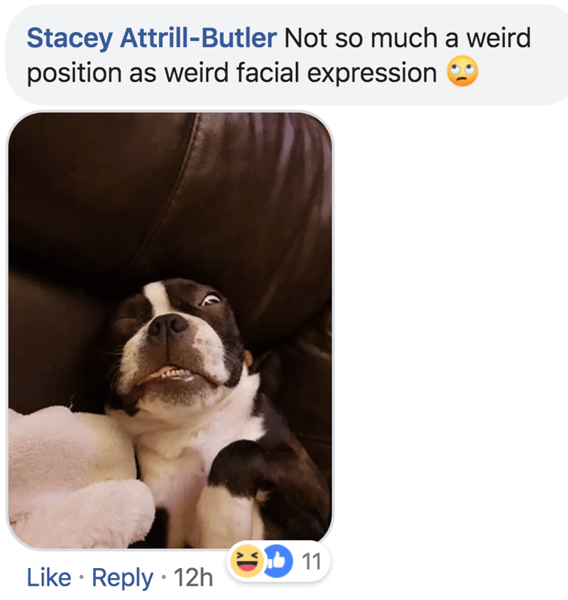 Dog - Stacey Attrill-Butler Not so much a weird position as weird facial expression 11 Like Reply 12h