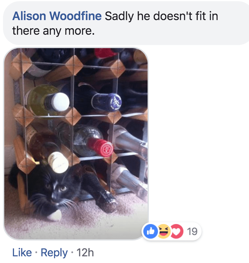 Product - Alison Woodfine Sadly he doesn't fit in there any more. O19 Like Reply 12h