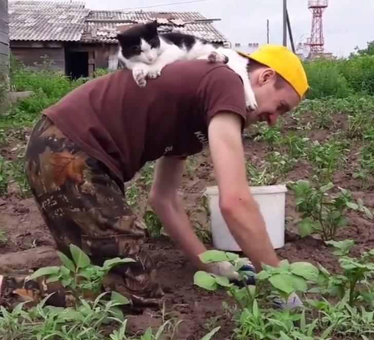 Soil - KH