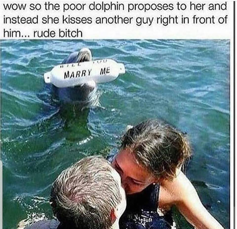dolphin in water holding a buoy that says marry me and a woman kissing a man - wow so the poor dolphin proposes to her and instead she kisses another guy right in front of him... rude bitch MARRY ME