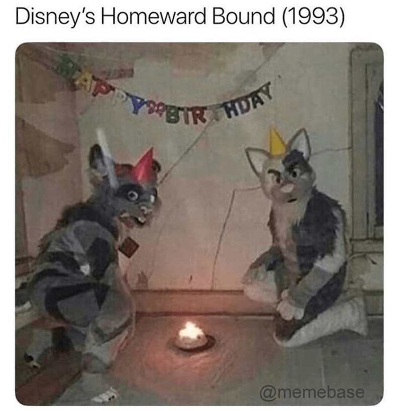 Funny meme about homeward bound movie using cursed image with furries.